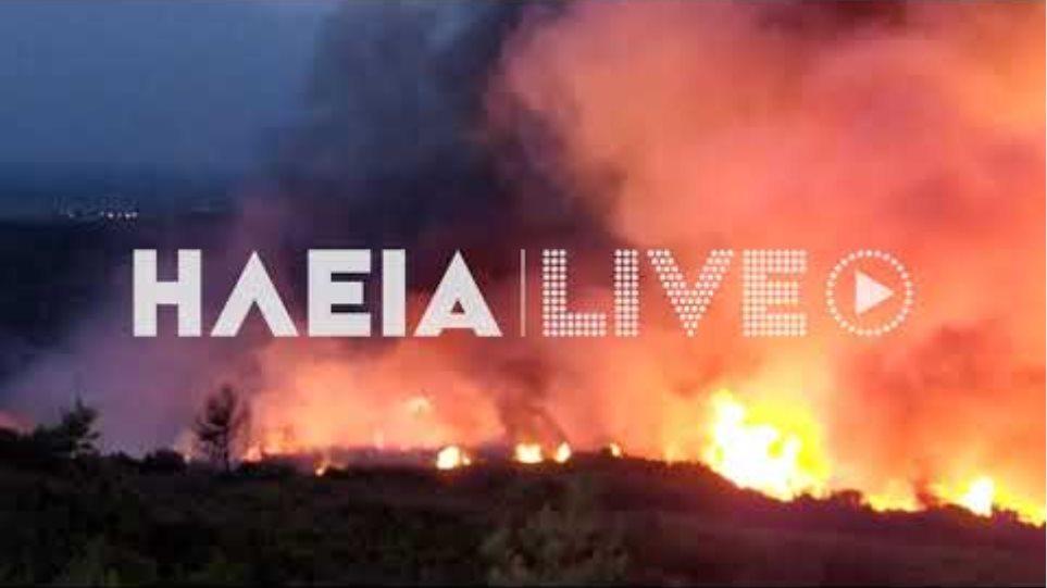 ilialive.gr - Πυρκαγιά σε δάσος στην Τριανταφυλλιά