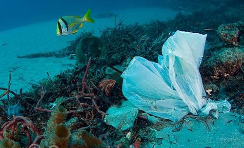 plásticos-mediterráneo